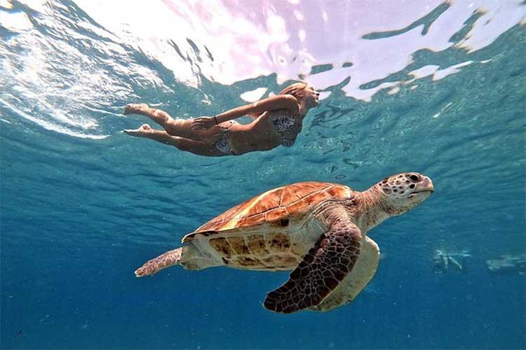 Zwemmen met zeeschildpadden op Curaçao